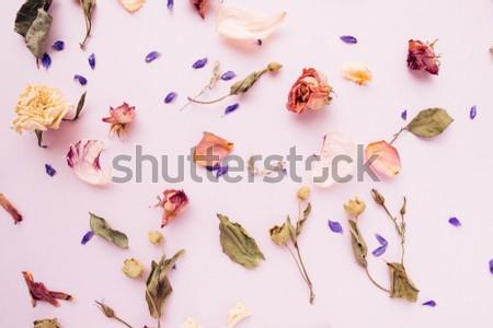 Air dried petals, flowers and leaves on pink background photographed in natural lighting. Can be used as is or for blogs, pinterest, social media, as a digital wallpaper, label background...