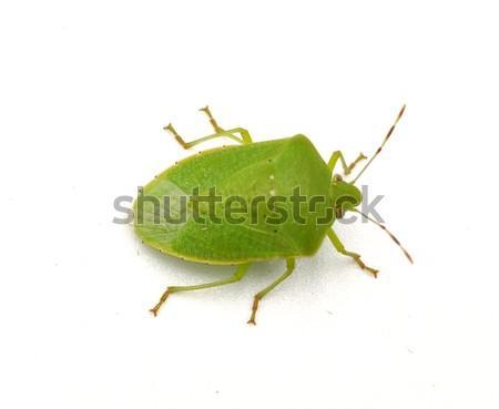 Pinterest Green bug   Green bug   Stink bug, stink beetle, white background